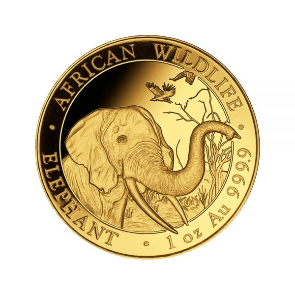 Somalia Elefant 2018